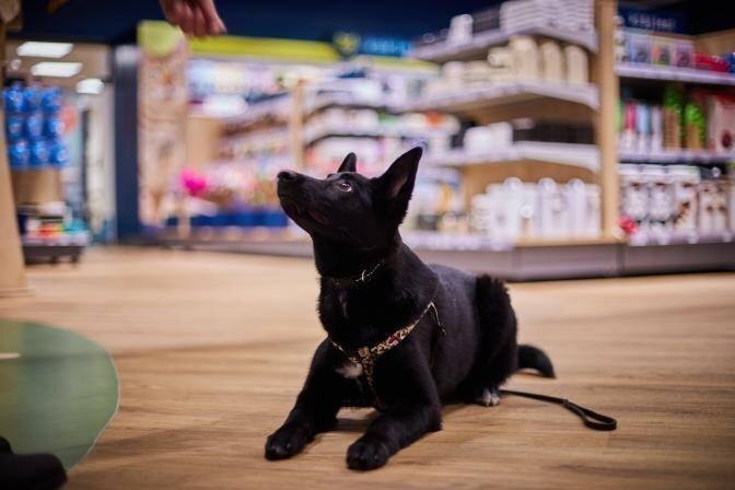 Kam suņu skola vajadzīga vairāk - sunim vai saimniekam?