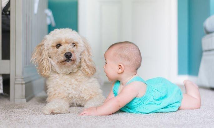Mājdzīvnieks un jaundzimušais. Kā pareizi rīkoties, ja ģimenē gaidāms pieaugums?