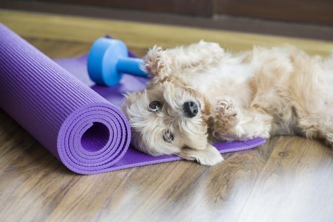 TESTS: Vai Tavam sunim ir liekais svars?