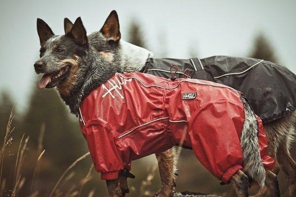 Tīrs kažoks un sausas ķepas vienmēr! Arī lieliem suņiem ziemā patīk komforts