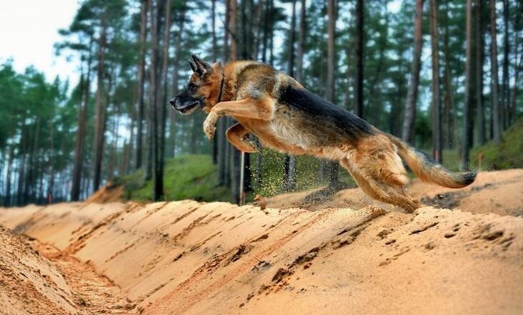 Artrīts suņiem un suņu senioru aprūpe