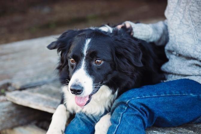 Kontakts starp saimnieku un suni - vai iespējams to sabojāt?