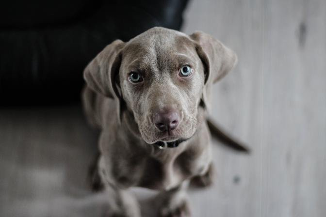 TESTS: Vai Tavam sunim ir ādas problēmu pazīmes?