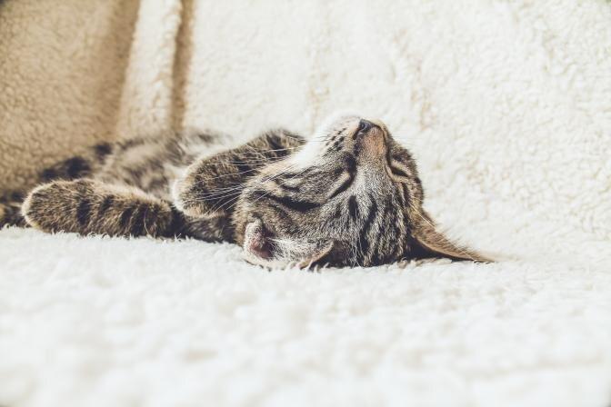 No idejas līdz realitātei – kas jāņem vērā, iegādājoties kaķi