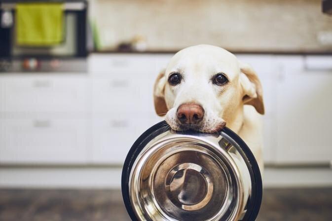 Pārbarošana nav labākais mīlestības izrādīšanas veids. Kā veidot veselīgu un sabalansētu suņa uzturu.