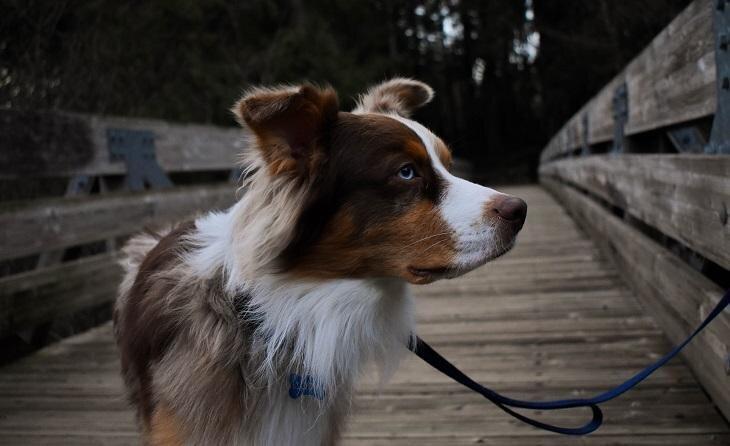 Kā sunim izvēlēties piemērotāko pavadiņu? Neapjūc piedāvājumu klāstā!