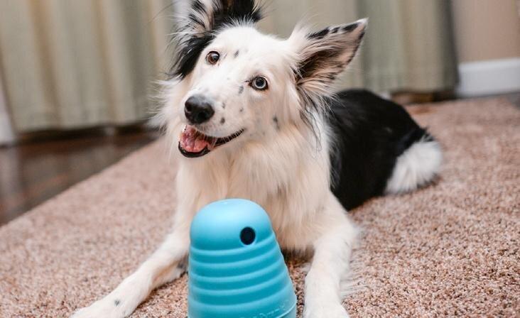 Spēlēšanās kopā ar mājdzīvnieku - kuras ir populārākās rotaļlietas četrkājainajiem mīluļiem?