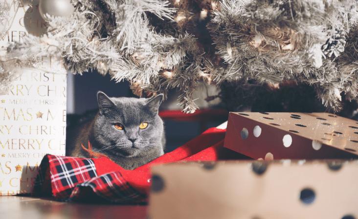 Kaķi un Ziemassvētku eglītes. Kā pasargāt vienu no otra?