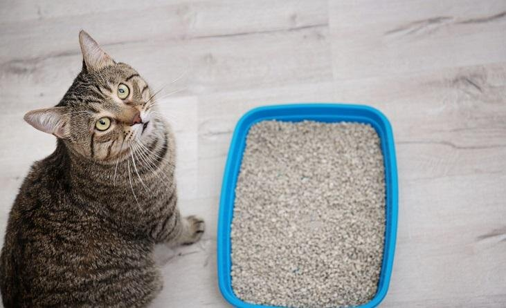 Kaķis nokārtojas ārpus kastītes. Pie vainas spīts vai veselības problēmas?
