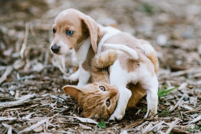 Pirmās potes un pastaigas brīvā dabā - kā sagatavot kucēnus un kaķēnus