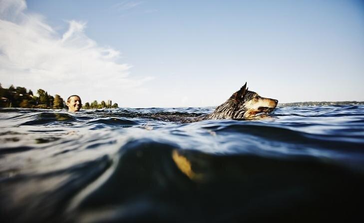 Suns un ūdensprieki. Ko svarīgi ņemt vērā?