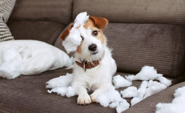 Kā novērst suņa garlaikošanos un tās sekas?