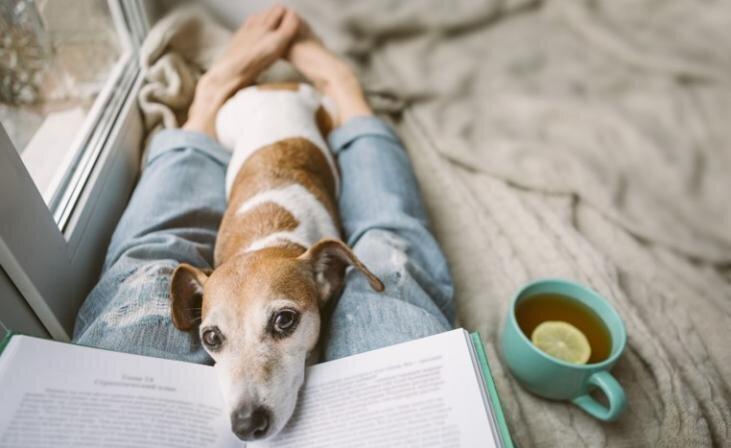Suns un pašizolācija. Kā uzlabot mīluļa ikdienu, ja nevarat iziet pastaigā?
