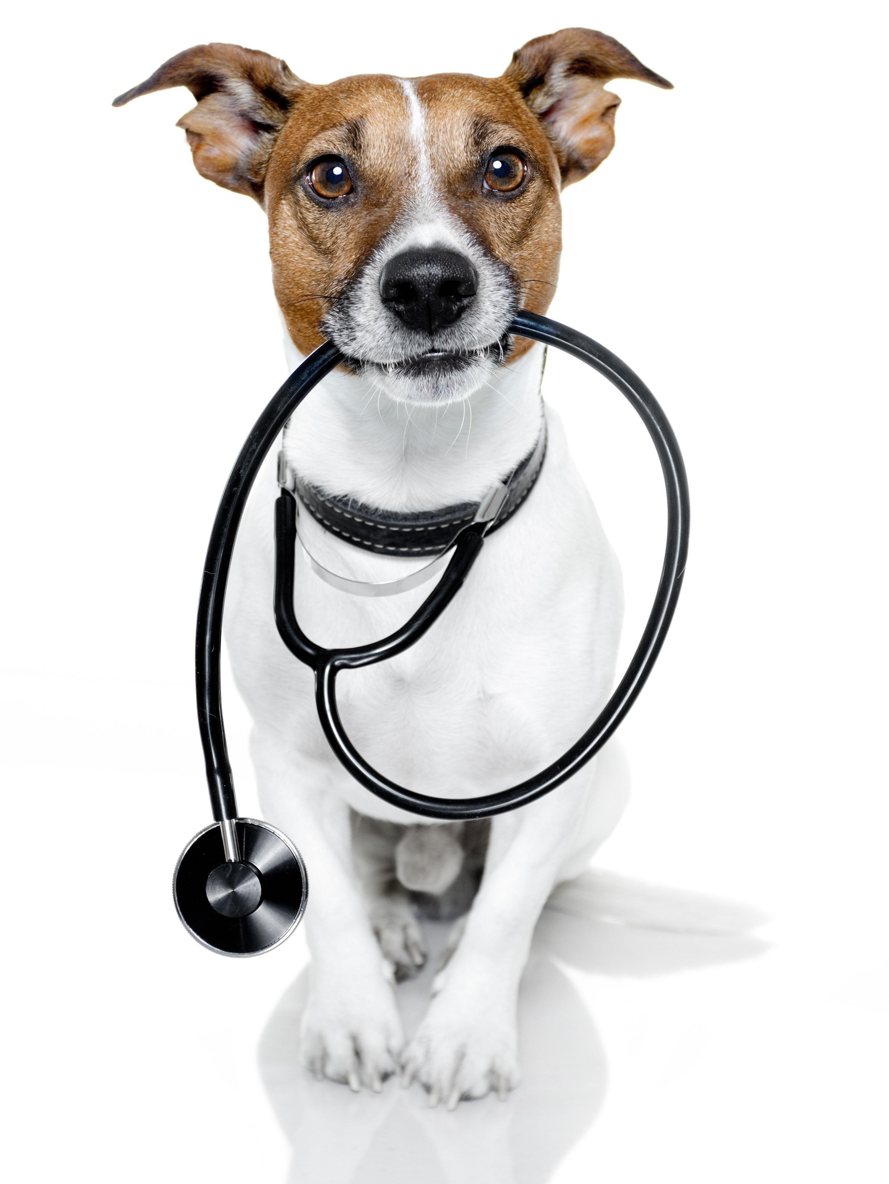 PetCity veterinārajā klīnikā iespēja veikt pilnu mīluļa veselības pārbaudi!
